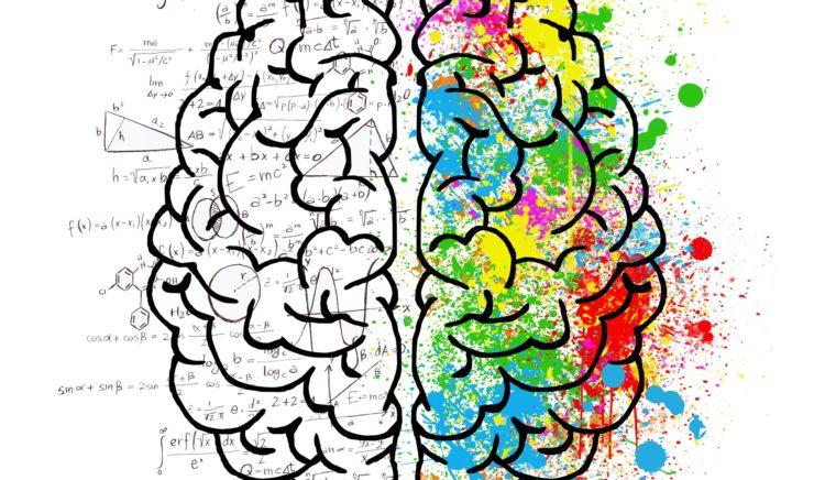 Wist-je-datjes over je brein