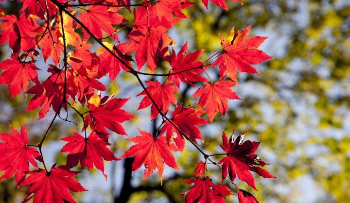 De 6 leukste herfstactiviteiten 2